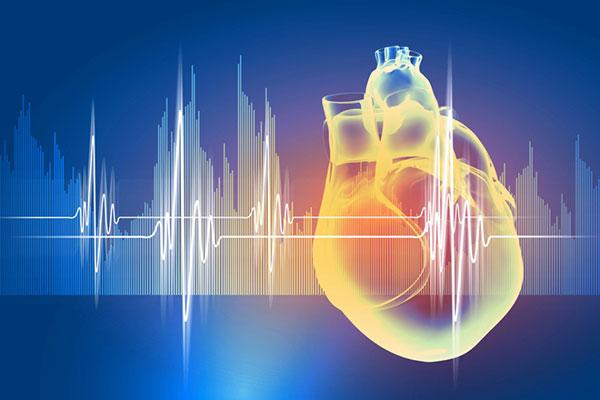 Los-modelos-realistas-de-corazones-en-3D-se-unen-a-la-batalla-contra-las-enfermedades-cardíacas-(2)