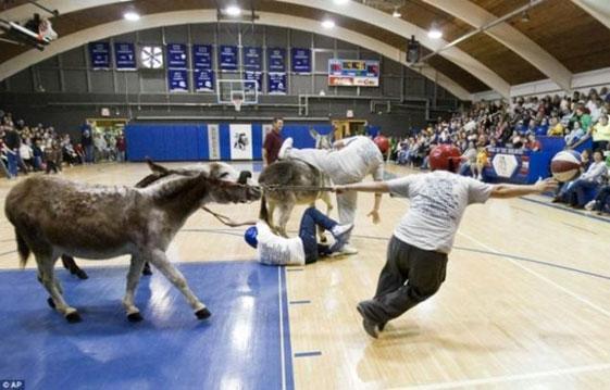 Baloncesto-en-burro-un-deporte-fuera-de-lo-comun-02
