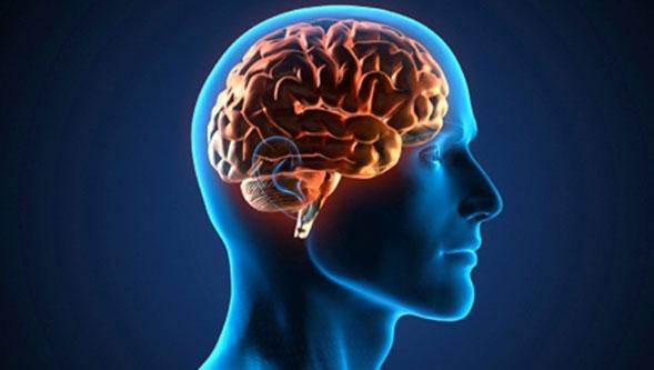 Cannabis-para-revertir-algunos-efectos-del-envejecimiento-cerebral-02